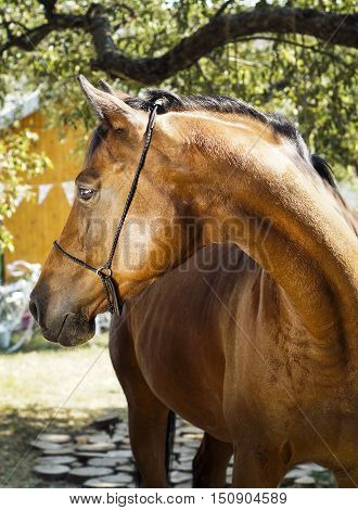 brown horse with a brown mane stands on a background of green leaves