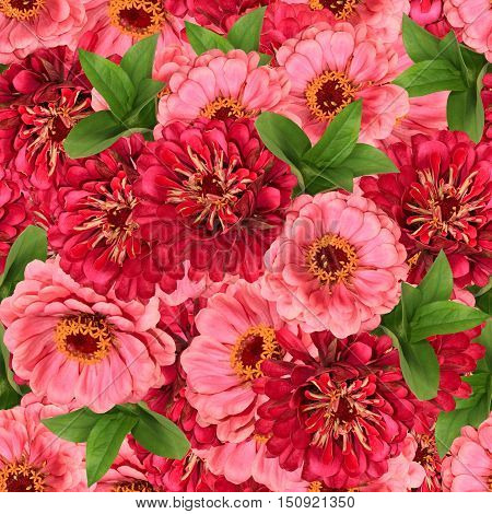 Floral seamless background with leaves and flowers zinnias