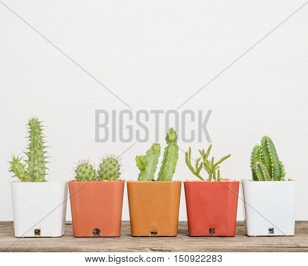 Closeup group of cactus in white and brown plastic pot on blurred wood desk and white cement wall textured background with copy space