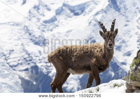 capricorn in the french alps in summer