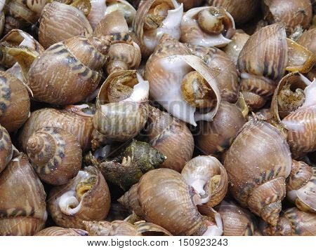 the texture of sea snails to eat in the kitchen