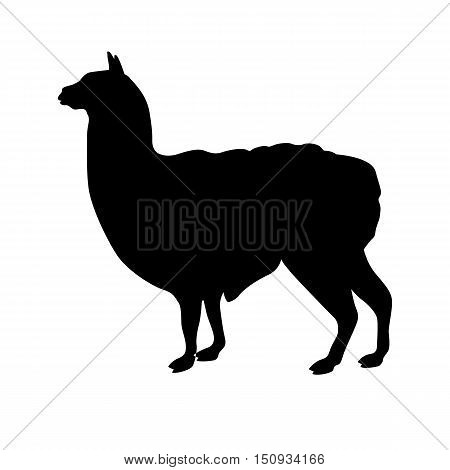 Lama vector illustration black silhouette profile side