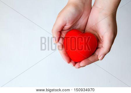 Tender hands holding sweet little heart isolated on white background