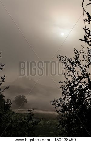 Mysterious foggy morning after the sunrise in the Tuscany land Italy
