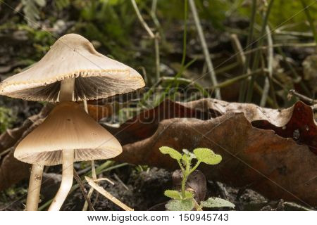 Mushrooms in the forrest flor late september