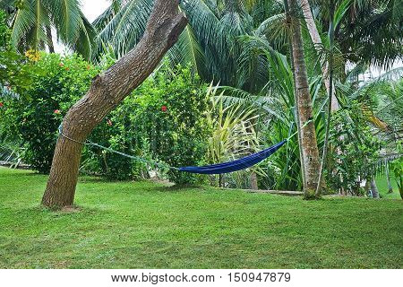 Green contemplative garden with palm trees flowers and blue hammock hanging between two trees.