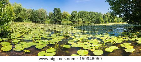 Panoramic view of the pond with water lilies