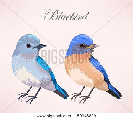 Vector illustration of cute bluebird in two color variants