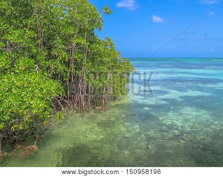 The mangrove of Isla Saona in Parque Nacional del Este, East National Park, Dominican Republic. Saona island is one of the most popular tours starting from Bayahibe, a popular tourist destination.