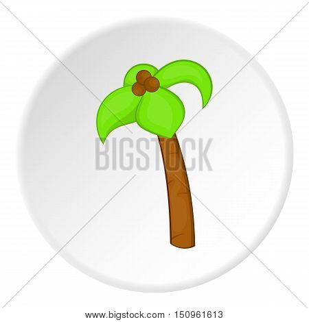 Palm tree with coconuts icon. Cartoon illustration of palm tree with coconuts vector icon for web