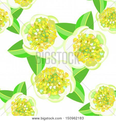 Seamless Pattern With Tea Bush Or Camellia Chinese. Vector Illustration