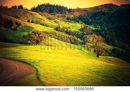 Northern California Landscape. Summer in Redwood Area Close to Eureka Humboldt County California United States. California Countryside.