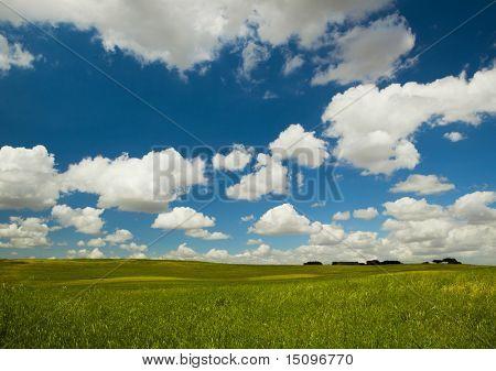 Schöne grüne Wiese mit einem großen bewölkten Himmel