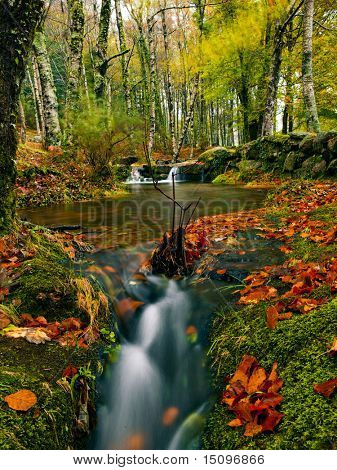 Beautiful river flowing by the forest during the Autumn season