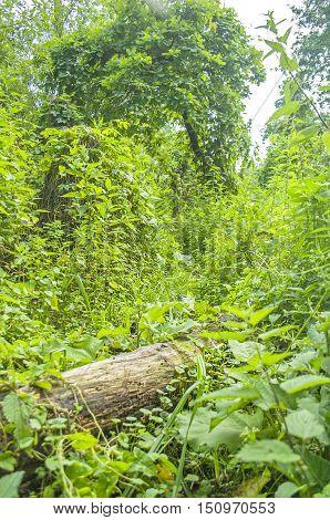 Fallen Tree In A Forest.