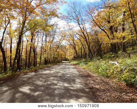 A roadway though fall foliage  in a park that is used for biking and car traffic.