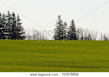 Cultivated Farmers Field