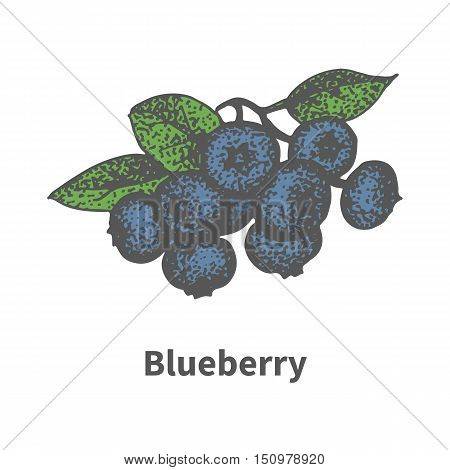 Vector illustration doodle sketch hand-drawn bunch of ripened blue blueberry. Isolated on white background. The concept of harvesting. Vintage retro style. Ripe bilberry with leaves and branches.