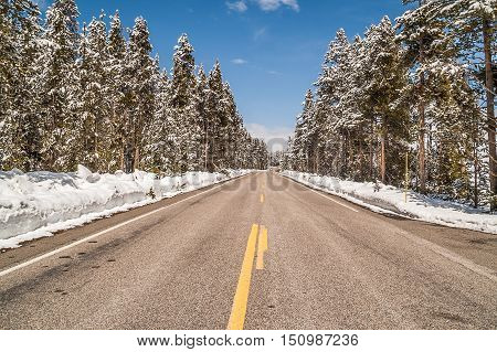 Roads are plowed sun is out the sky is blue, and there is snow on the trees. Welcome to Yellowstone National Park in May!