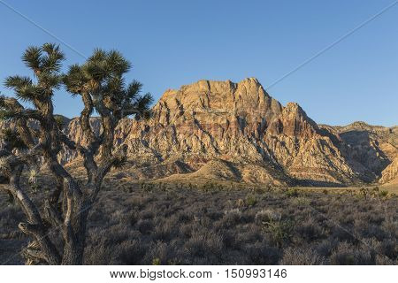 Dawn light on Mt Wilson in Red Rock Canyon National Conservation Area.  The popular park is twenty miles from downtown Las Vegas, Nevada.