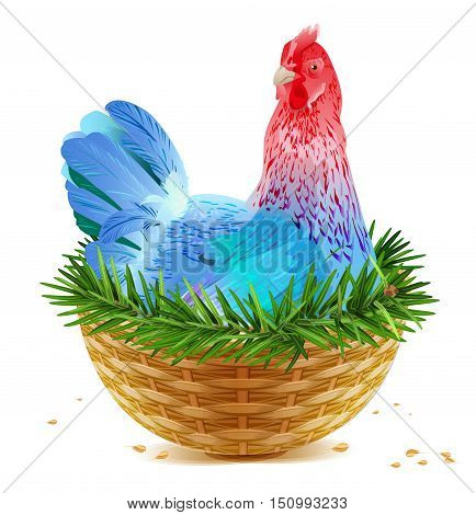 Blue Christmas chicken laying hen symbol of 2017 sits in basket nest on spruce branch. Isolated on white vector cartoon illustration
