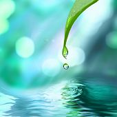 image of rain-drop  - green leaf with water drop water on blue sunny background - JPG