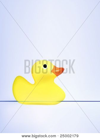 vector duck swimming on water