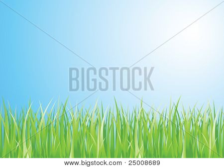 Colorful grass. Vector.