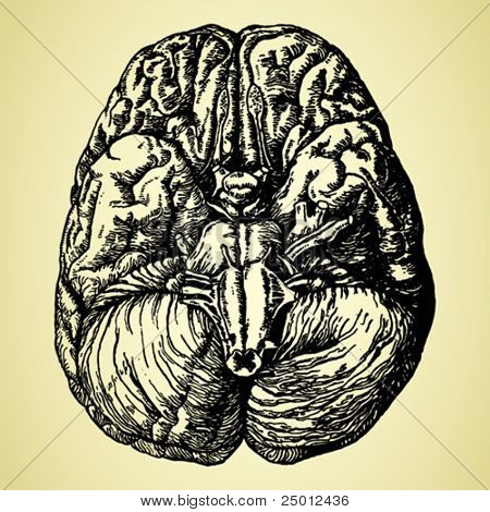 old time hand-drawn brain
