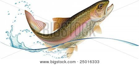 Jumping trout with water splash.  Vector illustration.