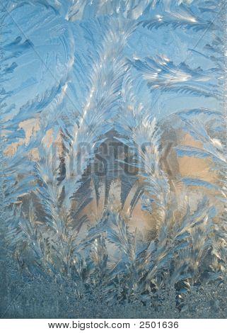 Spruce Like Frost