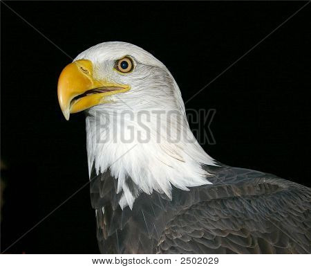 Bald Eagle Power