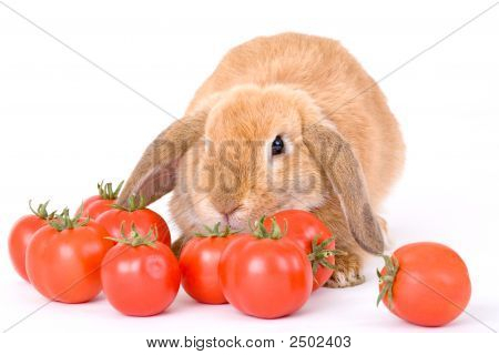 Brown Bunny And Some Tomato Isolated On White