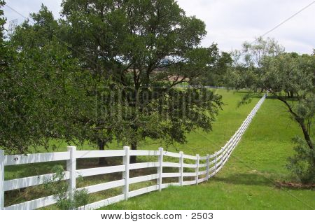 Fence Into Forever