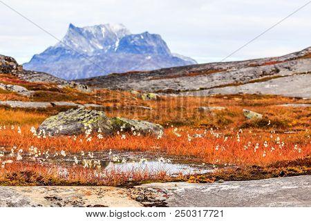 Autumn Greenlandic Tundra Plants And