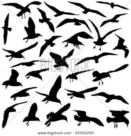 A Set of Vector Bird Silhouettes
