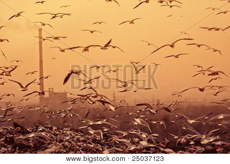 Apocalyptic background with birds, industrial chimney... retro style toned photo