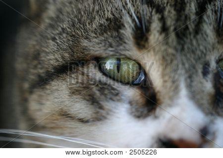 ein Katzenauge