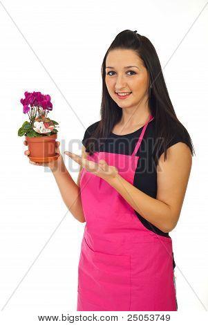 Florist Woman Offering Cyclamen For Sale