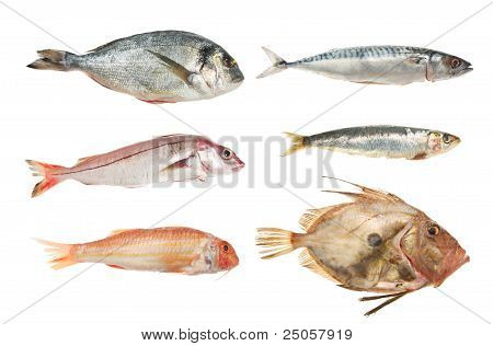 Fish Group