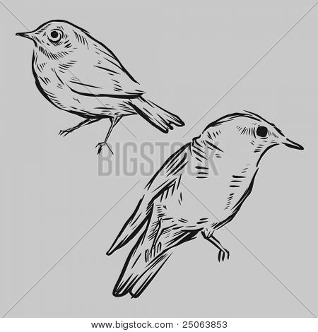 Hand drawn birds. Vector illustration.
