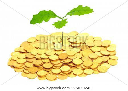 Sprout of oak growing from the pile of coins.(Concept of long-term investments)