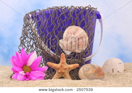 Sea Shells And Flower