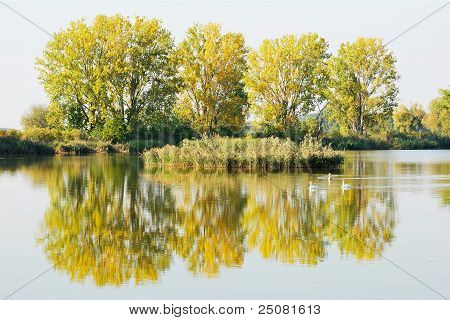 Autumn Trees By A Pond