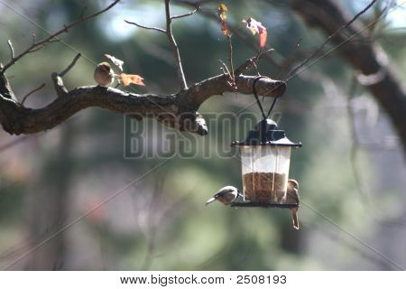 Birds And Feeder