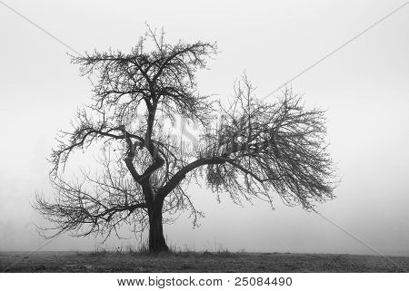 Apple Tree In The Fog