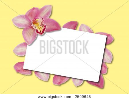 Orchid Template