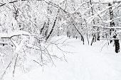 Snowy Footpath In Urban Timiryazevskiy Park In Moscow City In Winter poster