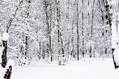 Snowy Forest Of Timiryazevskiy Park Of Moscow City In Overcast Winter Day poster