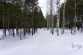 Winter Landscape Overcast Perspective Postcard Rime Snowflakes poster